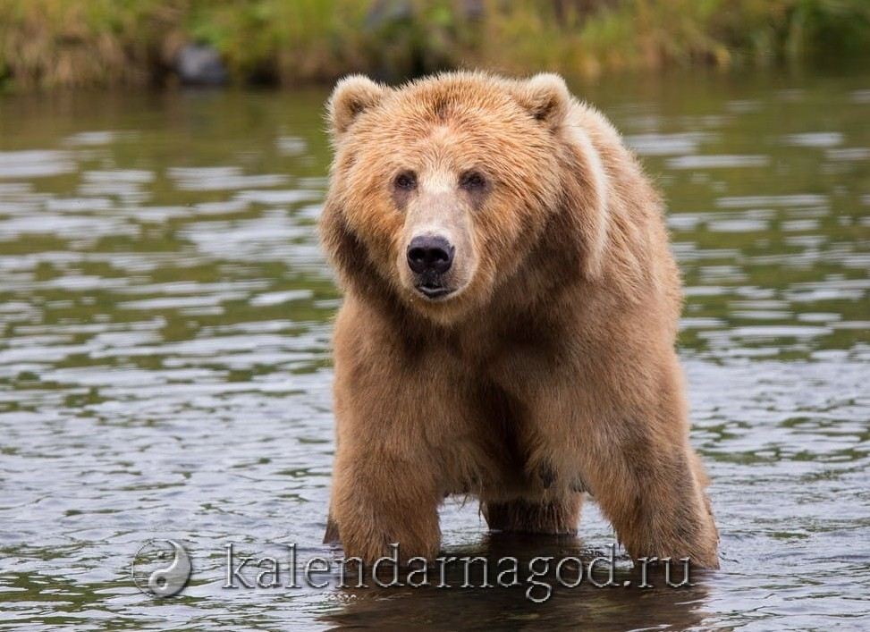 Сонник медвежонок к чему снится мужчине