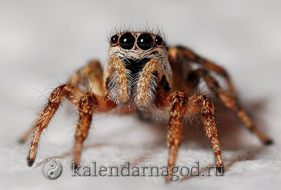 К чему снится большой черный паук женщине мужчине сонник