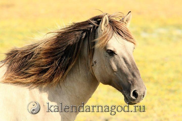 Знак зодиака телец огненная лошадь